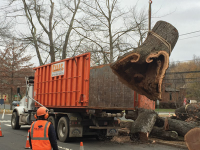 NJ Tree Removal Containers